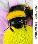 Bumblebee Pollination On Yello...