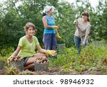 three women harvesting potatoes in field - stock photo