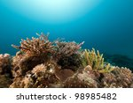 tropical reef and fish in the... | Shutterstock . vector #98985482