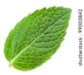 fresh mint leaves isolated on... | Shutterstock . vector #99003842