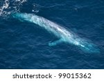 Aerial Shot Of A Blue Whale In...