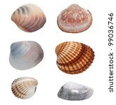 Collection Sea Shells Isolated...