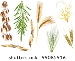 illustration with cereals... | Shutterstock .eps vector #99085916