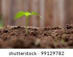 sprout growing out of dirt in a ...   Shutterstock . vector #99129782