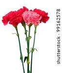 bouquet of carnations isolated... | Shutterstock . vector #99162578