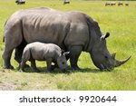 White Rhinoceros With 3 Weeks...