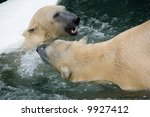 polar bears fighting | Shutterstock . vector #9927412
