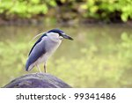 beautiful view of a bird black... | Shutterstock . vector #99341486
