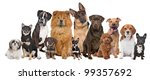 Stock photo group of twelve dogs sitting in front of a white background 99357692