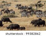 Buffalo  Syncerus Caffer In...