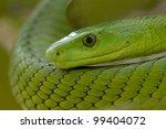 green mamba snake  dendroaspis... | Shutterstock . vector #99404072