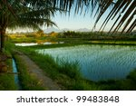 Rice Terrace In Mountains On...