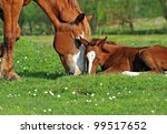 akhal teke mare and foal | Shutterstock . vector #99517652