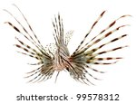 Marine Fish  Lion Fish Isolate...