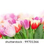 tulip flowers isolated on white | Shutterstock . vector #99701366