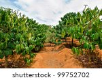 coffee plantation   dalat ... | Shutterstock . vector #99752702