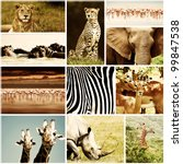 African Wild Animals Safari...