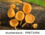 Orange Mushroom Or Champagne...