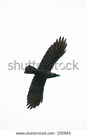 vector silhouette crane on