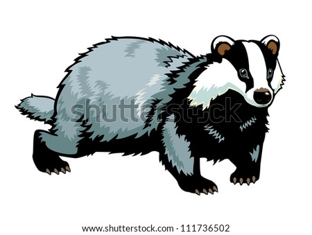 badger   vector picture