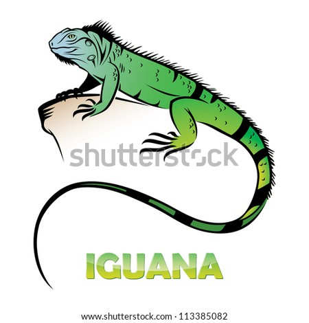 iguana   vector illustration