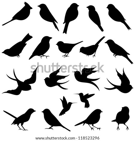 vector collection of bird