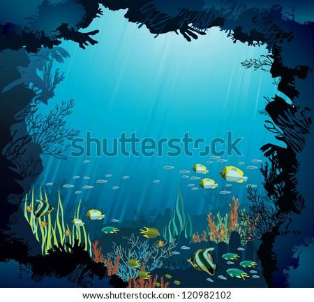 underwater life   coral reef