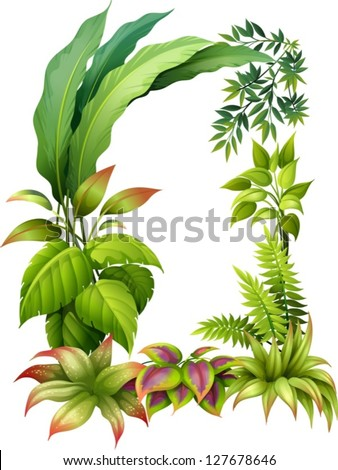 illustration of leafy plants on