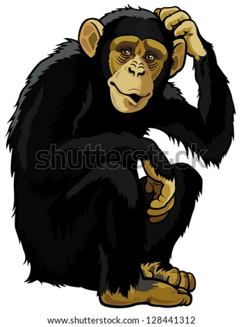 monkey chimpanzee simia