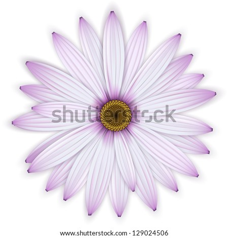 purple daisy flower isolated