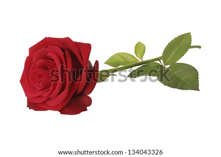 realistic red vector rose on