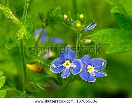 the miracle of spring violets