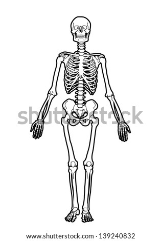 outline human skeleton free vector download (6,083 free vector, Skeleton