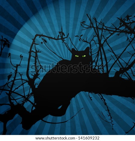 black cat in night