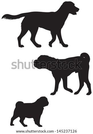 labrador retriever  shar pei