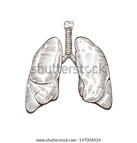 lungs hand drawn isolated on a