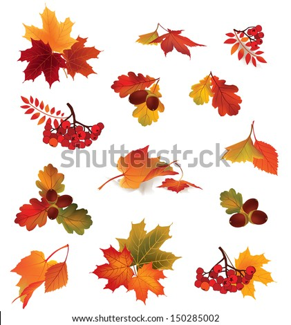 autumn icon set fall leaves