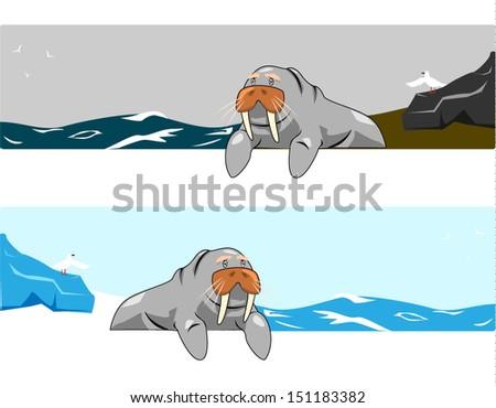 walrus vector