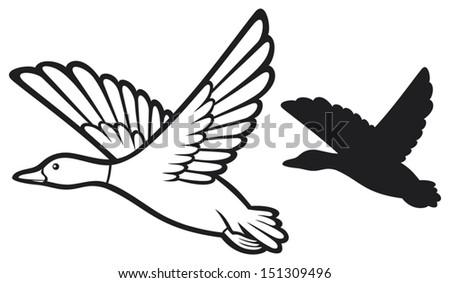 mallard duck flying  bird duck