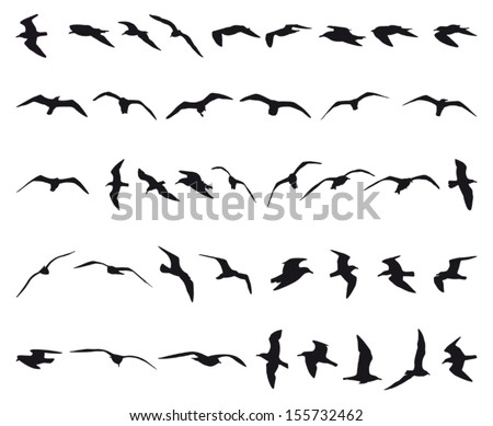 forty seagulls flying black