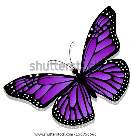 beautiful butterfly  isolated