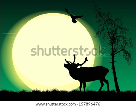vector illustration of deer on