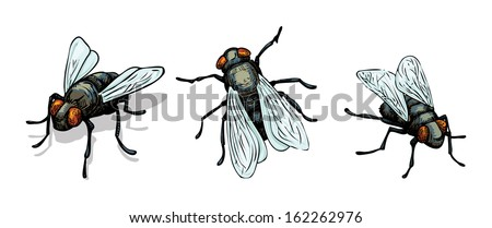 set of hand drawn house fly