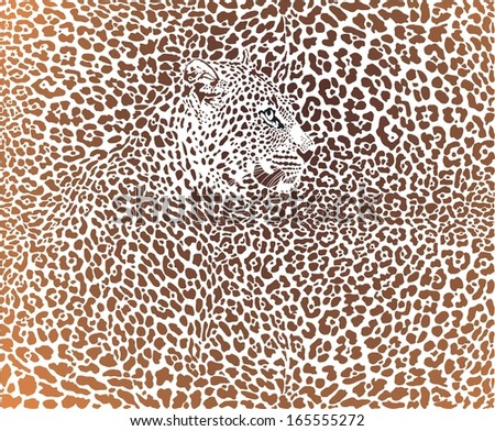 vector illustration leopard