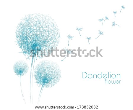 flower dandelion sketch