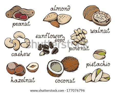 nuts set  vector collection