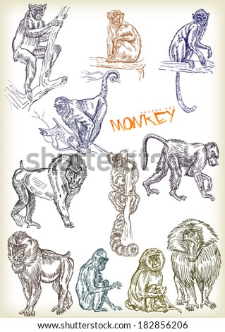 hand drawn monkey vector set