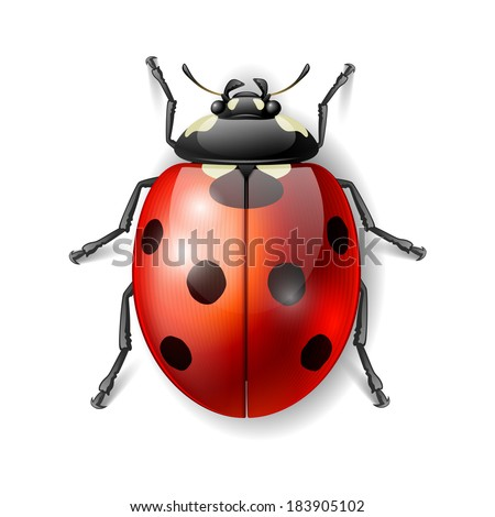 ladybird vector illustration