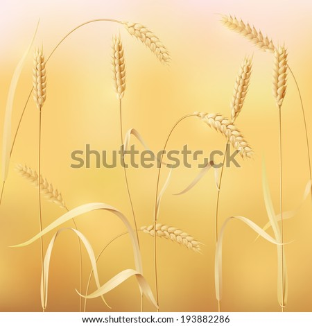 background with field of wheat