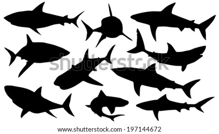 shark silhouettes on the white